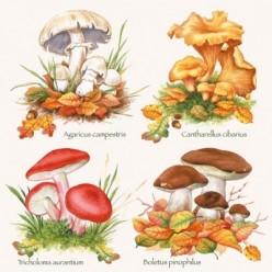 Servilleta Decoupage Mushrooms,